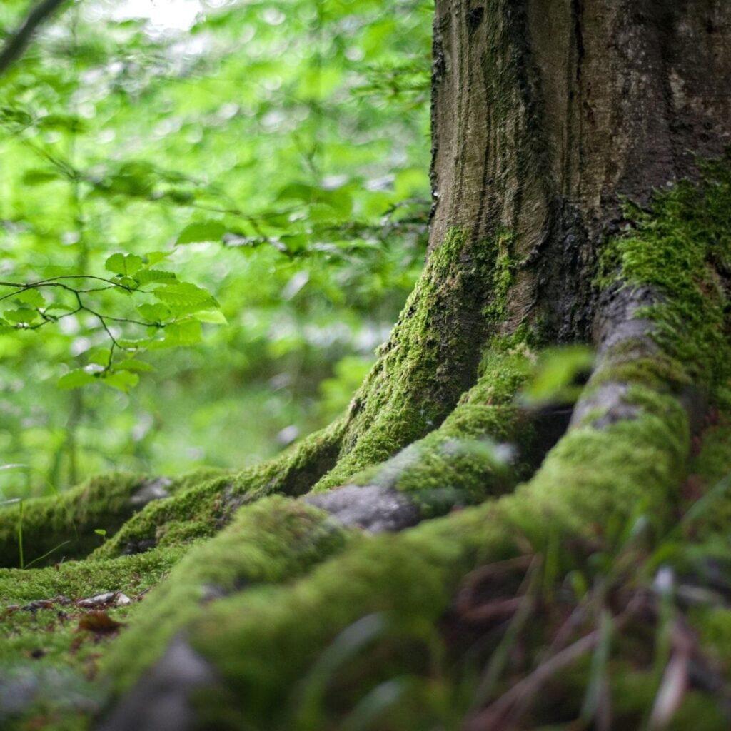 Admirative de la nature